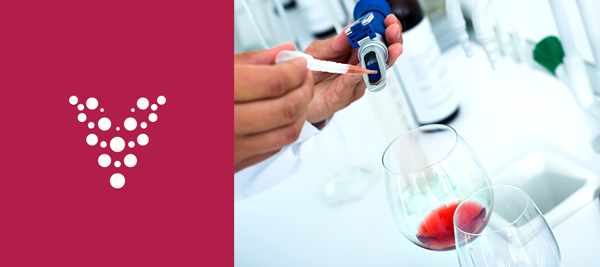 Scientist performing laboratory testing on wine